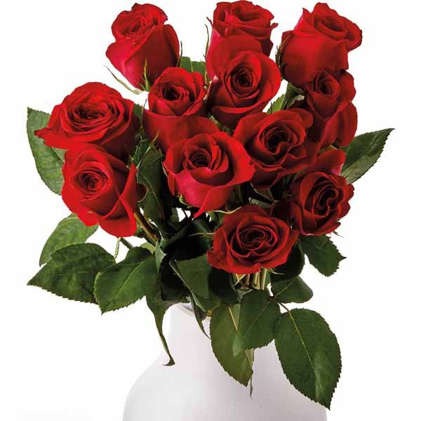 short stem Valentines Day Roses